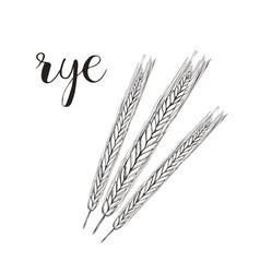 rye sketch rye hand drawing vector image vector image