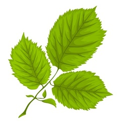 Branch with green leaves on vector image