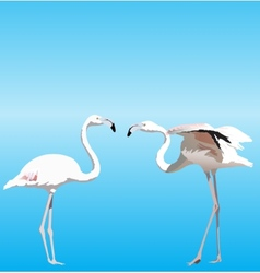 with two Flamingo vector image
