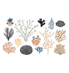 collection of various corals and seaweed or algae vector image