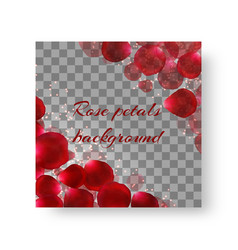 Cover leaflets with rose petals vector