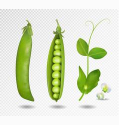 green peas 3d green vector image