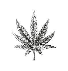 Hand drawn hemp leaf cannabis plant vector