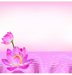 pink background flower Lily vector image