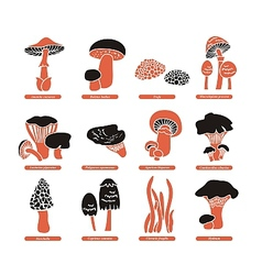 Edible Mushrooms Set vector image