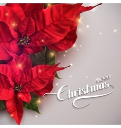Merry Christmas Holiday vector image