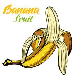 bananas fruit hand drawn color vector image