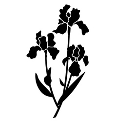black silhouettes of iris vector image