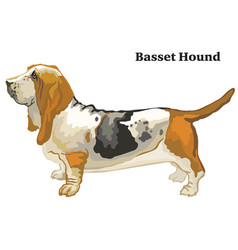 Colored decorative standing portrait of basset vector