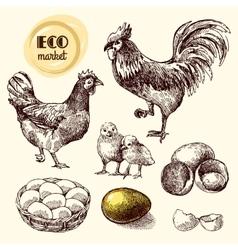 Eco farm chicken vector