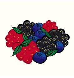 Ripe forest berries raspberries blueberries vector
