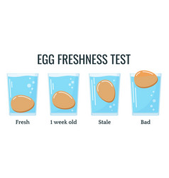Eggs floating in transparent glass water vector