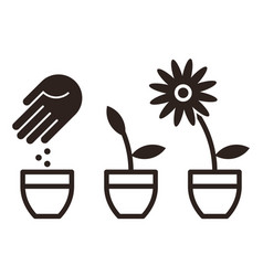 flower planting vector image