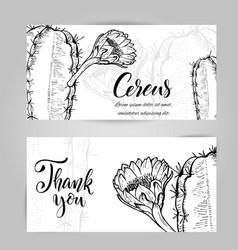 Hand drawn night blooming cereus vector