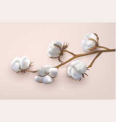 horizontal cotton branch vector image
