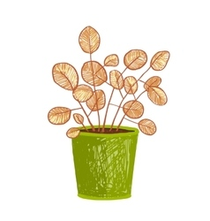Indoor leafy plant in pot hand drawn vector image
