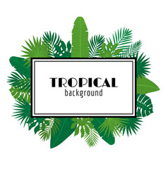 tropical leaves background summer design square vector image