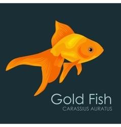 Aquarium fish Gold Fish vector image