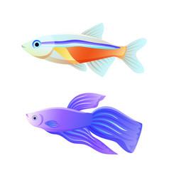 Colorful sea inhabitant neon tetra and betta fish vector