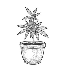 narcotic cannabis plant sketch vector image
