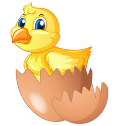 Little chick comes of of egg vector