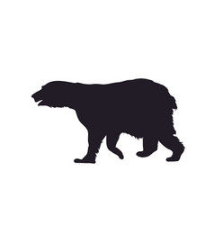 a bear that stands drawing vector image