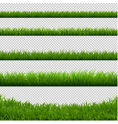 green grass big borders collection transparent vector image