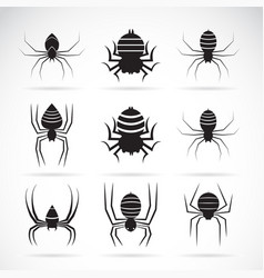 group of spiders on white background insect vector image