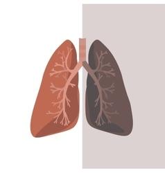 Human lung anatomy vector