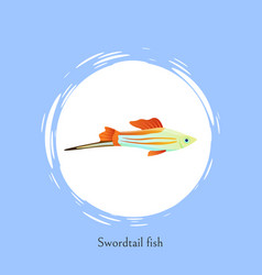 swordtail fish in white circle isolated on blue vector image