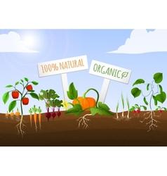 Vegetable garden poster vector image