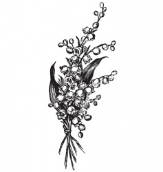 antique lily vector image vector image