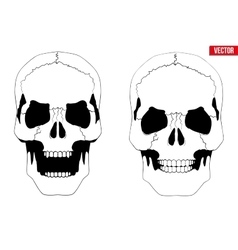 Human skull with open mouth in sketch style vector image