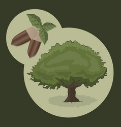 acorn and tree vector image