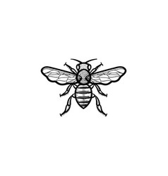 bee hand drawn sketch icon vector image