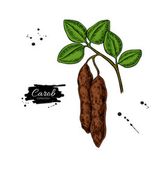 carob branch superfood drawing isolated vector image