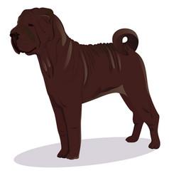 chinese shar pei chocolate dog vector image