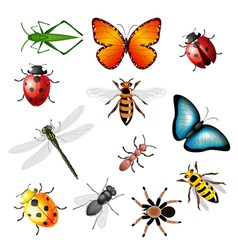 Collection insects vector