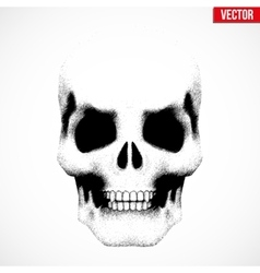 Human skull in sketch style vector image