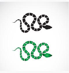 Snake design on white background animals reptile vector