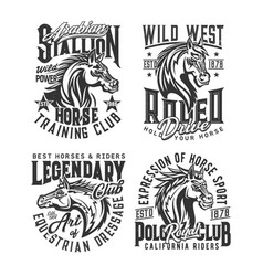 stallion horse and wild mustang t-shirt print vector image