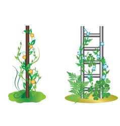 vertical plants with flowers vector image