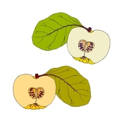 Yellow quince with leaves vector image