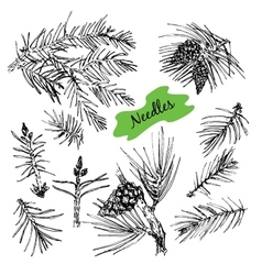 Collection with pine needles vector
