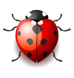 heart form ladybird vector image vector image