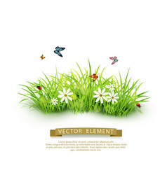 element for design green grass isolated vector image vector image