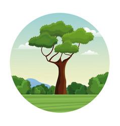 tree branch bushes forest landscape design vector image vector image
