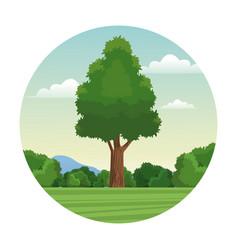 tree wood forest landscape stamp vector image vector image