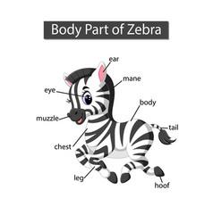Diagram showing body part zebra vector