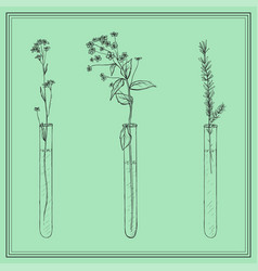 hand drawn lavender plants flowers in vitro vial vector image